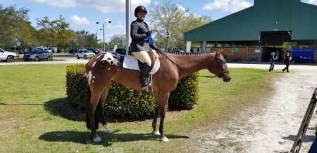 Indy, Appaloosa Gelding for sale in Florida