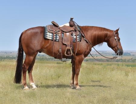 Topsail Spark, American Quarter Horse Gelding for sale in Nebraska