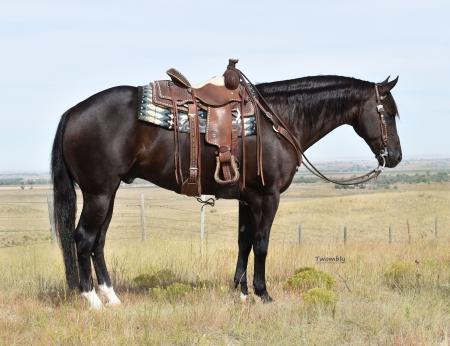 Bandits Steel, American Quarter Horse Gelding for sale in Nebraska