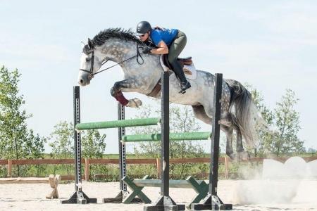 Indi, Irish Sport Horse Gelding for sale in Florida