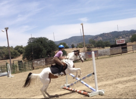 Indy, Other Mare for sale in California